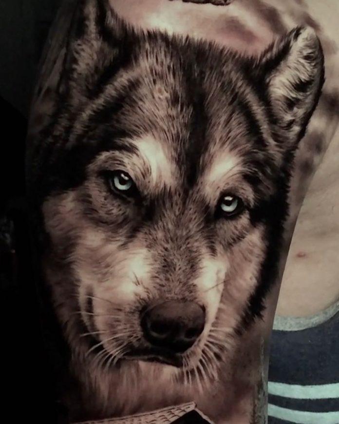 Tatouage de gros plan de tête de Loup réaliste sur l'épaule